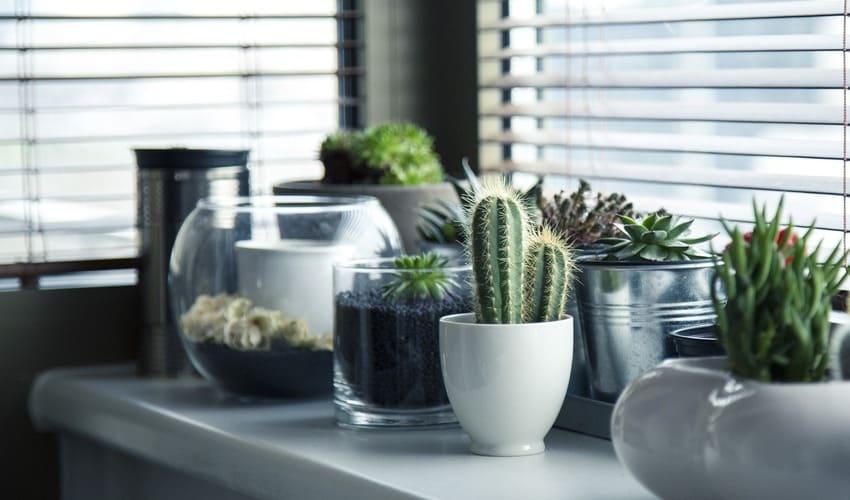 Plantas no interior da casa